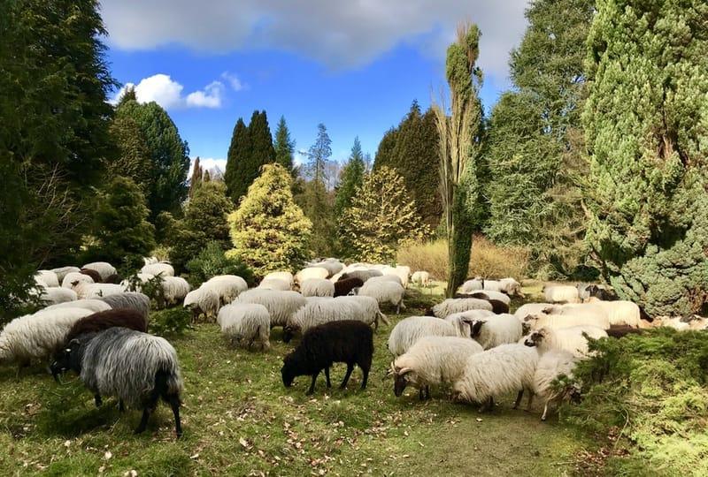 pinetum-anloo-kudde